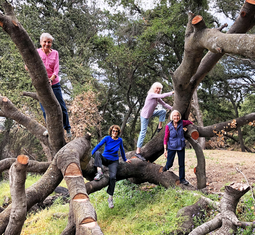 Joan, Shelah, Lora and Tessa up a tree!